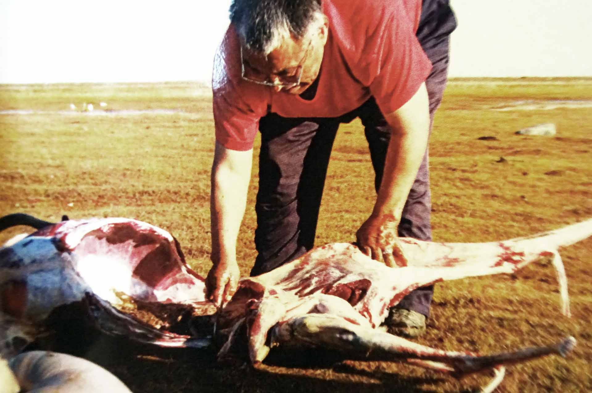 Threatened: The Inuit´s traditional Way of Life